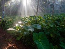 Morgon djungeln Royaltyfri Bild