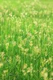 morgon för 2 gräs Royaltyfria Bilder