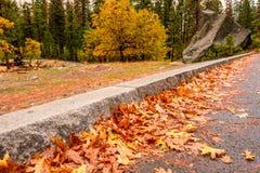 Morgon för höst för Yosemite dal molnig med stupade gulingsidor på den våta asfalten Arkivfoton