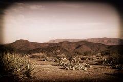 Morgon i öknen Arkivbild