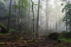 Morgon i den djupa skogen Arkivfoto