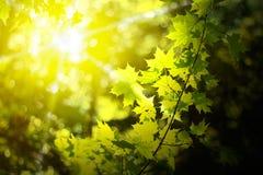 Morgon i en skog royaltyfri fotografi