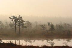 Morgon i estländsk myr Arkivbilder