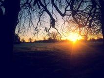 Morgon i fälten Arkivbild