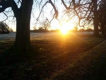 Morgon i fälten Arkivfoto