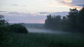 Morgon i fältet i sommar arkivfoton