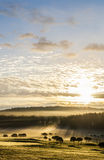 Morgon i golfbana Royaltyfri Bild