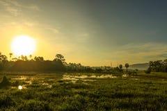 Morgon i grönt fält Royaltyfria Foton