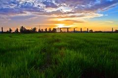 Morgon i indonesia risfältfält Arkivfoton