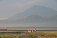 Morgon i landet Fotografering för Bildbyråer