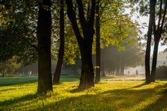 Morgon i parkera arkivfoton