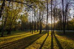 Morgon i parkera Arkivbilder