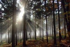 Morgon i skog Royaltyfria Bilder