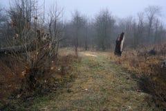 Morgon i skog Arkivbild
