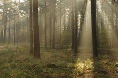 Morgon i skogen. Royaltyfria Foton