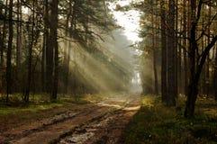 Morgon i skogen. Arkivfoton