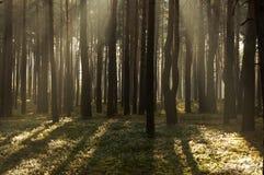 Morgon i skogen. Royaltyfria Bilder