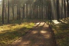 Morgon i skogen. Arkivbilder