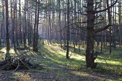 Morgon i skogen Arkivbild