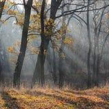 Morgon i skogen Arkivfoton