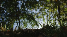Morgon i skogen som strålarna för sol` s passerar till och med träd arkivfilmer