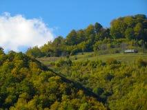 Morgon i trät för hushåll för ny luft för by Royaltyfri Foto