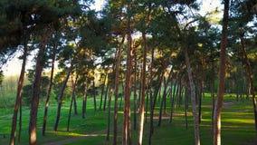 Morgon i trät Strålar för sol` s passerar till och med träden arkivfilmer