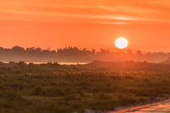 Morgon på en parkera nära den Khong floden i det Bueng Kan området, Th Arkivbilder