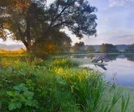 Morgon på floden Arkivbild