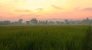 Morgon på Sawah Royaltyfri Foto