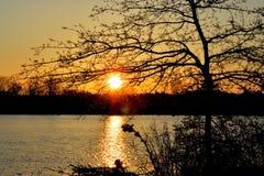 Morgon på sjön Arkivbilder