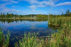 Morgon på Stoney Swamp Arkivbilder