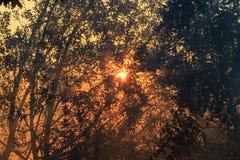 Morgon sol, soluppgång, Arkivbild