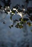 Morgon Sun Royaltyfri Foto