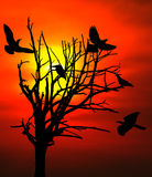 Morgon Sun Royaltyfria Foton