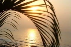 Morgon Sun Royaltyfria Bilder