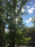 Morgon Sun Fotografering för Bildbyråer