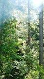 Morgon Sun Royaltyfri Fotografi