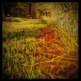 morgon sunday Arkivfoto