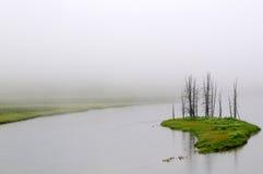 morgon wyoming yellowstone Fotografering för Bildbyråer