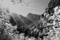 Morgonavbrott på Zion National Park Arkivfoton