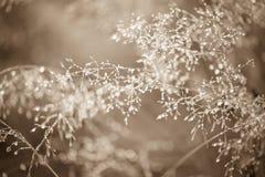 Morgondagg. Abstrakt vattendroppar på gräs Royaltyfria Bilder