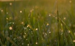 Morgondagg glittrar i sol Fotografering för Bildbyråer