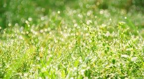 Morgondagg i gräs royaltyfria foton