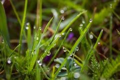 Morgondagg i sommartiden Fotografering för Bildbyråer