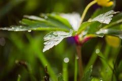 Morgondagg i sommartiden Royaltyfria Bilder
