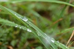 Morgondagg på det gröna gräset i de Carpathian bergen Fotografering för Bildbyråer