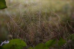 Morgondagg på en spindelrengöringsduk, närbild arkivfoton