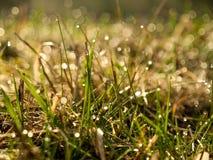 Morgondagg på gräs Arkivfoton