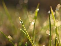 Morgondagg på gräs Royaltyfri Foto